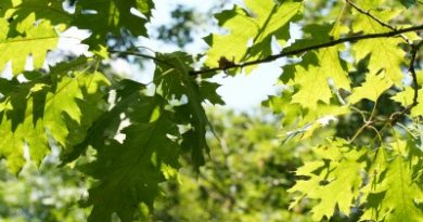 Tree Sharing Program